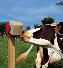 Bloki mineralne EKO - Dla bydła